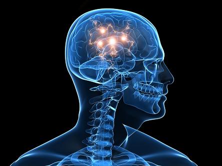 Cerveau Actif